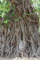 Wat Mahthat - Ayutthaya Temple - Thailand
